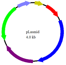 identifying the mystery plasmids based upon Identifying an unknown compound by solubility, functional group tests and spectral analysis this handout is a supplement to signature lab series anal 0727 and contains material adapted from.